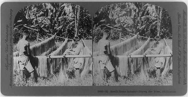 Manila hemp industry, Philippines_ Drying the fiber