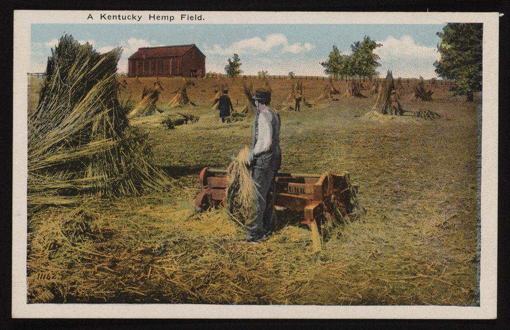 postcard-of-a-kentucky-hemp-field-1600